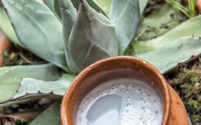 Pulque – Gift from the Goddess Mayahuel